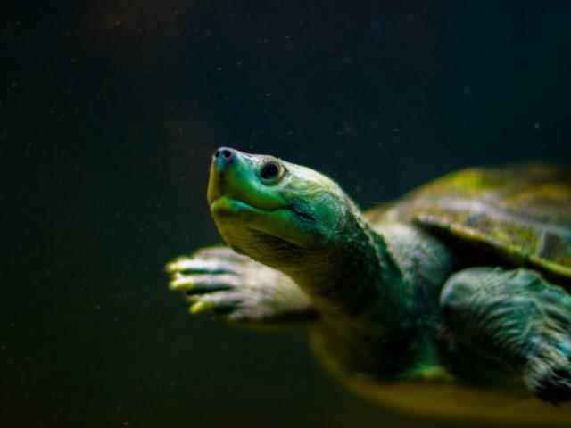 El enfoque de las Tortugas, ¿está vigente?