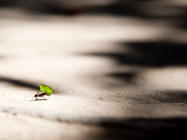 El gasto hormiga se digitaliza